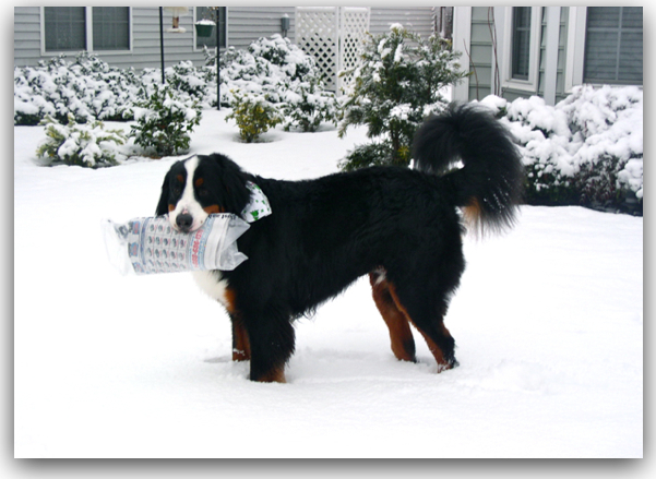Dog Newspaper snow.jpg